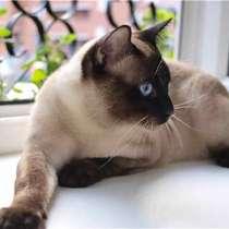 Продам котят, в Таганроге