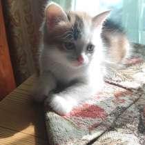 Котенок в Нижнем Тагиле, в Нижнем Тагиле