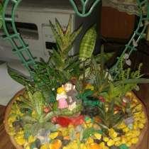 Суккуленты и кактусы, в Новосибирске