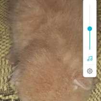 Кошка родила котят в добрые руки, в Раменское
