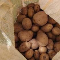 Продам картофель, в Качканаре