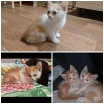 Два котенка Рыжика в добрые руки, в Саратове