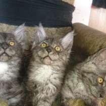Котята мейкунята ждут родителей, в Ростове-на-Дону