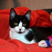 Златоглазая красавица - котенок 3,5 месяцев, в Санкт-Петербурге