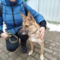 Белка небольшая собачка в добрые руки, в Москве
