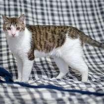 Умнейший Матвей, молодой домашний котик в добрые руки, в Москве