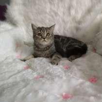 Наира кошка от питомника, в г.Алматы