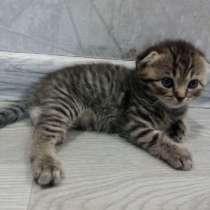 Котята, в Челябинске