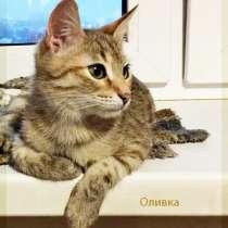 Оливка. Милая приятная молодая кошечка в добрые руки, в Москве