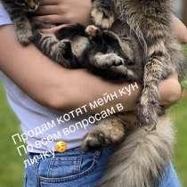Продам котят, в Серпухове
