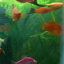 Рыбки, в Вихоревке