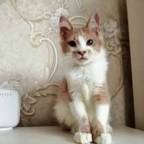 Котенок, в г.Брест
