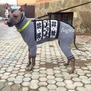 Одежда для Ксолоитцкуинтли и Перуанских голых собак, в Москве