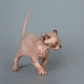 """""""Не всякая голая кошка-Эльф, бамбино или сфинкс"""", в г.Gregory Park"""
