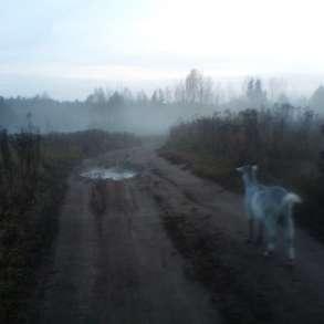 c1f02c081 Объявления о покупке и продаже домашних животных и растений в Кирово ...