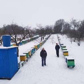 Продажа пчелопакетов, в Ростове