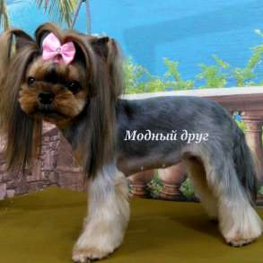 Зоосалон &Модный друг. Стрижка собак и кошек. Чистка зубов, в Москве