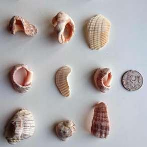 Морские Камни Ракушки Морские Камешки Раковины, в Самаре