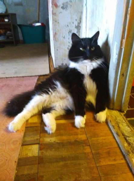 Невероятно большой и пушистый кот Лукас в дар