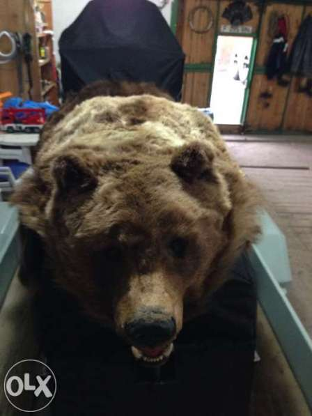 Шкура медведя - 230 см