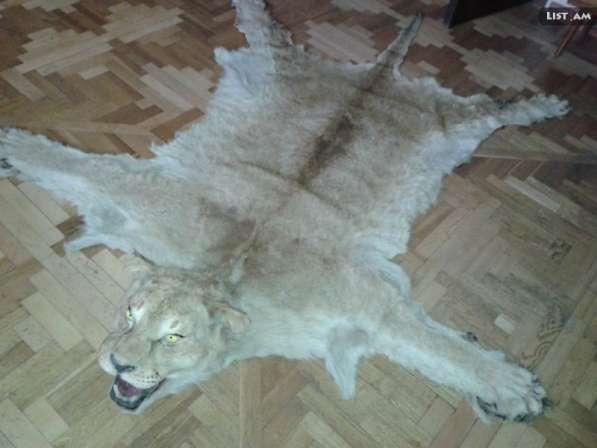 Шкура львицы