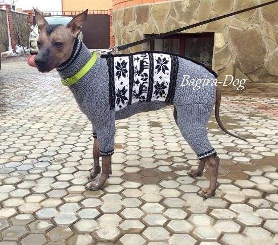 Одежда для Ксолоитцкуинтли и Перуанских голых собак