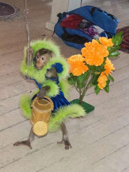 Дрессированная обезьянка на день рождения