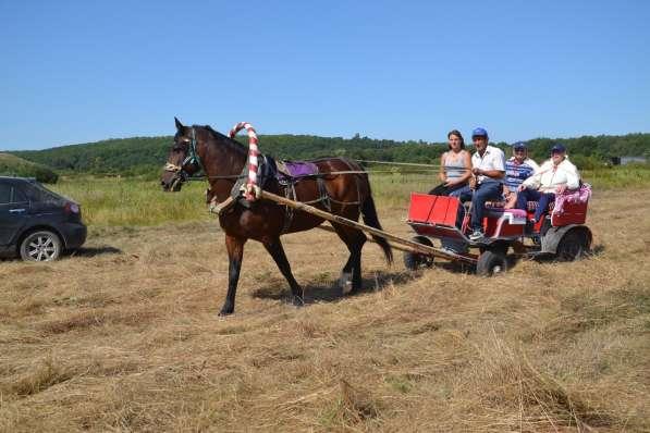 Конные прогулки в поля в Воронеже фото 3