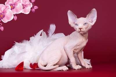 Волшебный котёнок сфинкс с другой планет в фото 3