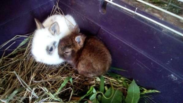 Продаются декоративные кролики в Уфе фото 6
