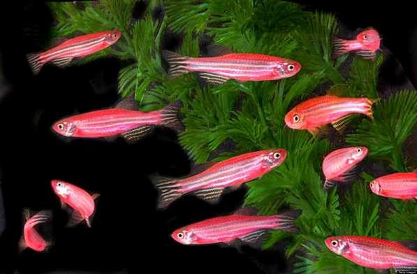 Аквариумные рыбки оптом и в розницу