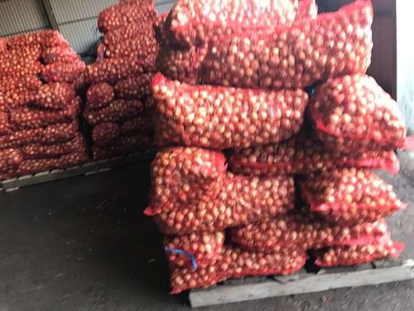 Продам лук на перо в Ростове-на-Дону фото 10