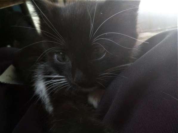 Отдам котенка в Пензе фото 4