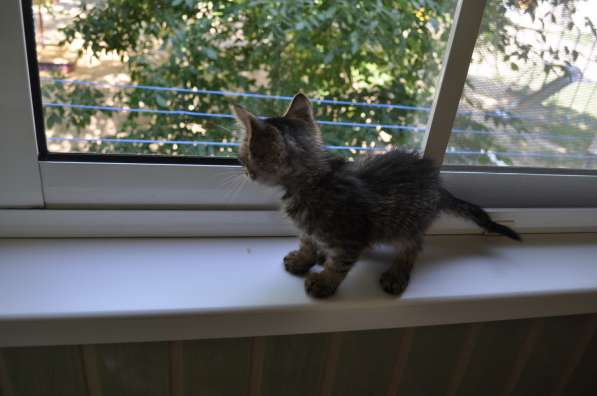 Котенок в добрые ручки в Волгограде фото 3