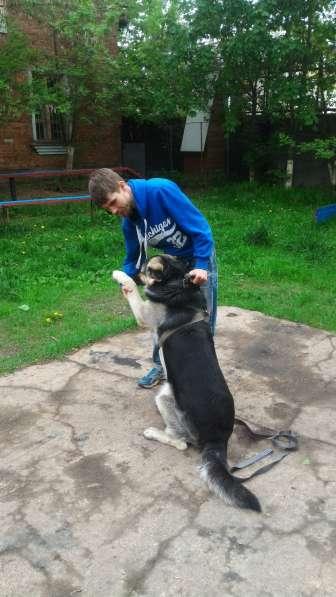 Передержка и дрессировка собак в Раменское фото 13