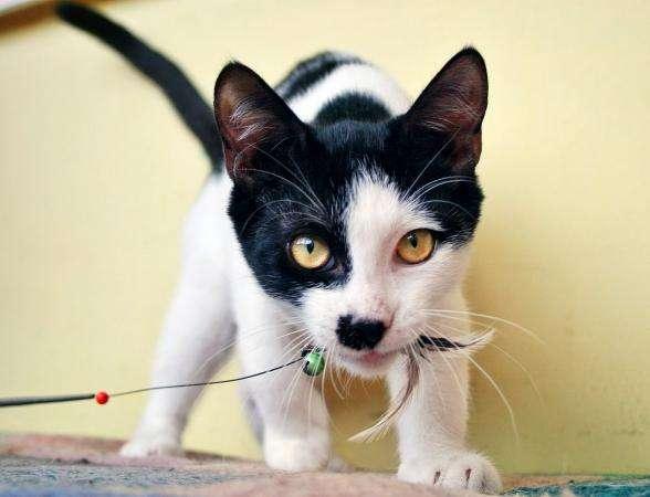 Веселый пиратик - котенок Зось ищет дом.