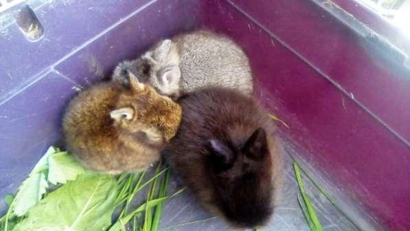 Продаются декоративные кролики в Уфе фото 3