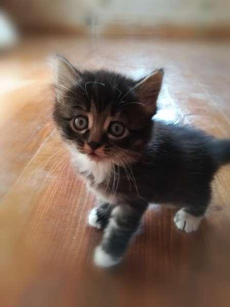 Подарю котят в