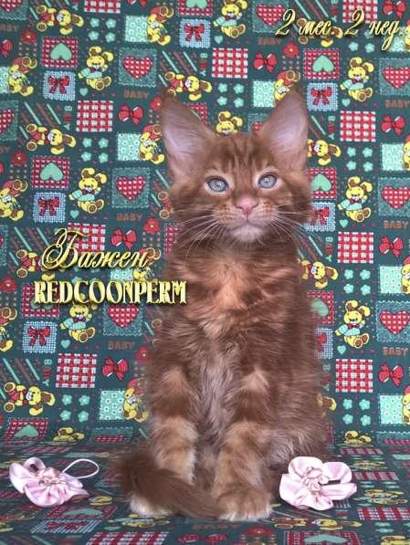 Котёнок менй кун красный солид. Шоу класс в Перми фото 13