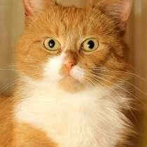 Ватсон - рыжий, честный, благородный! Супер кот ищет семью, в г.Санкт-Петербург
