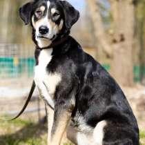 Статная, роскошная и великолепная собака ищет дом, в Санкт-Петербурге