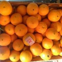 Апельсины Абхазские оптом, в г.Сухум