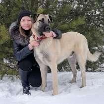 Великолепный молодой пес Сэм, метис конгала в добрые руки, в г.Москва