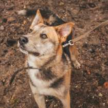 Пёс с янтарными глазами, в г.Санкт-Петербург