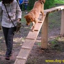 Дрессировка - Школа для собак и владельцев, в Москве