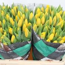 Тюльпаны оптом с доставкой от производителя из Голландии, в Братске