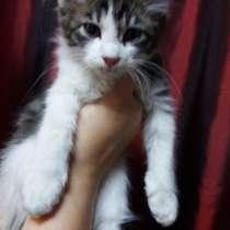 Отдам котят в хорошие рук, в г.Алматы