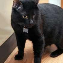 Отдам даром Особенный котик Черныш ищет дом, в г.Москва