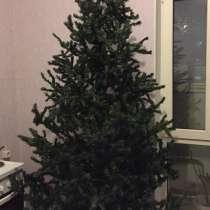 Продам елку, в Ноябрьске