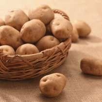 Картофель и другие овощи, в г.Санкт-Петербург